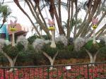 Fantasia Ostriches