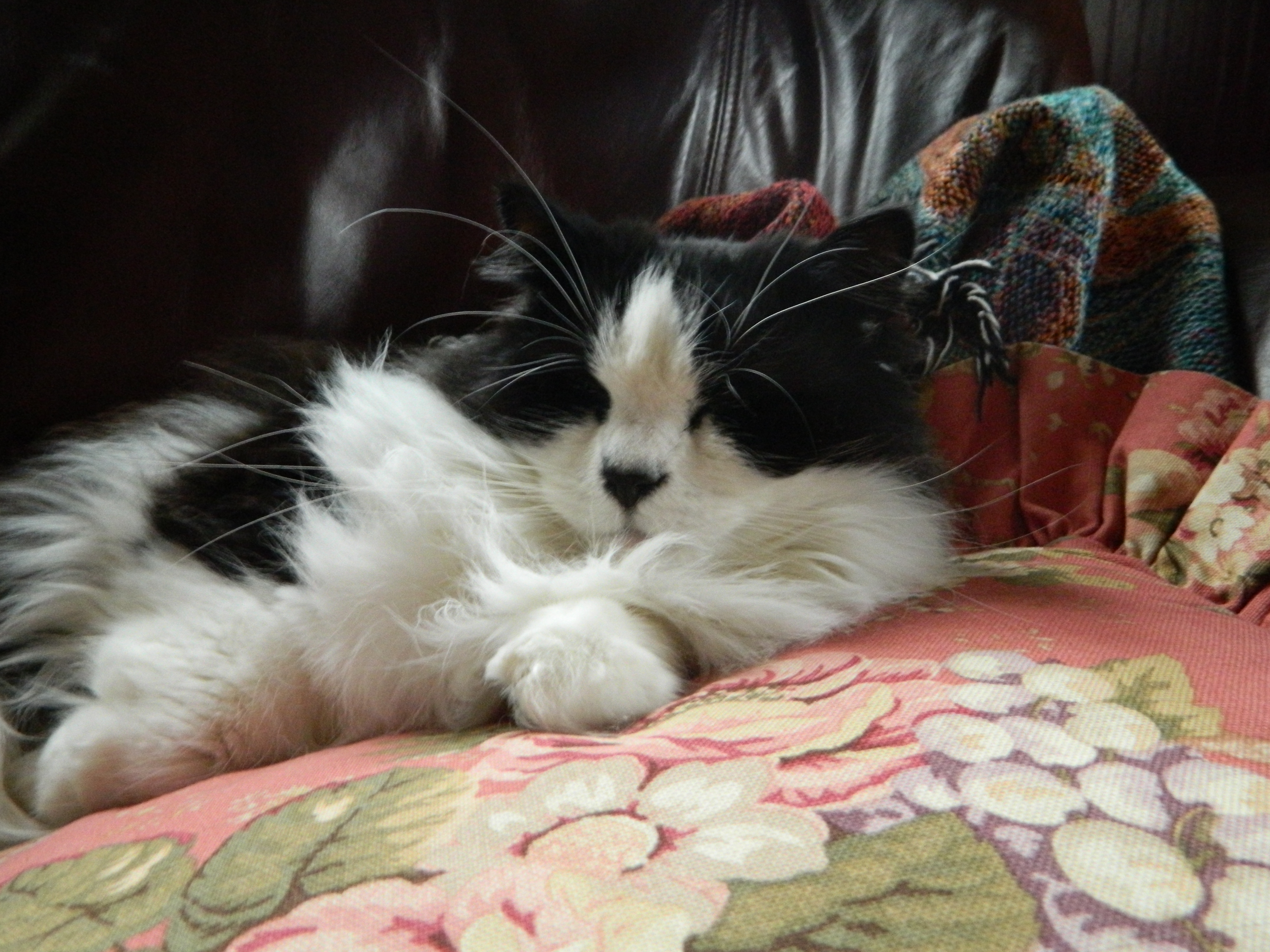 diazepam valium side effects in cats