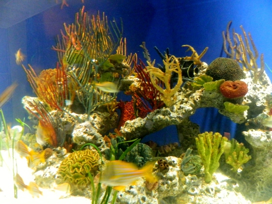 Tropical Diver Gallery Exhibit