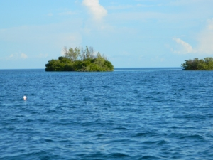 Mangroves off Key West