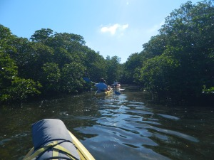 Floating through the Mangroves