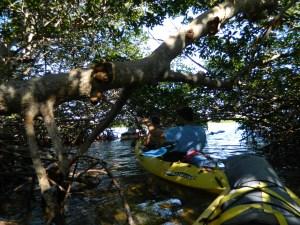 A Mangrove Maze