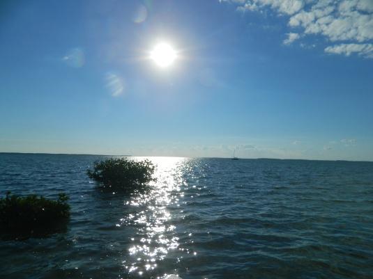 Sunny Key West Morning